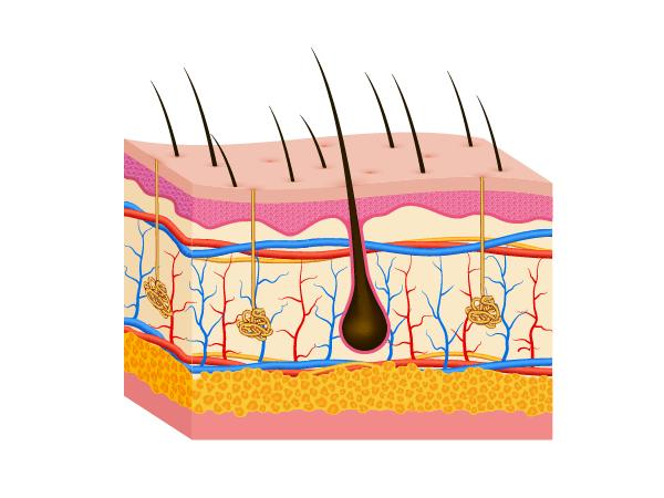 甚麼是頭皮清潔? 如何做好頭皮潔淨?